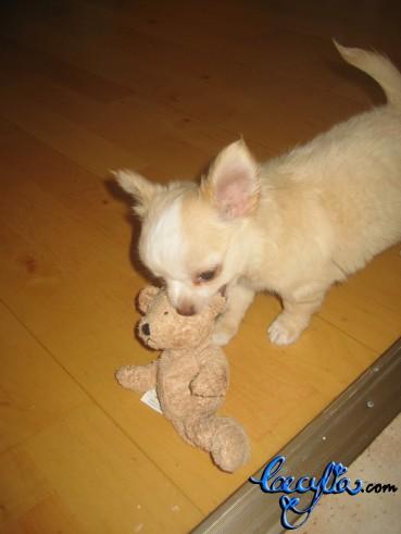 theodore teddy