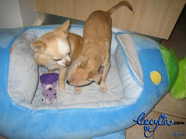 Theodore+Chilli in aeroplane bed