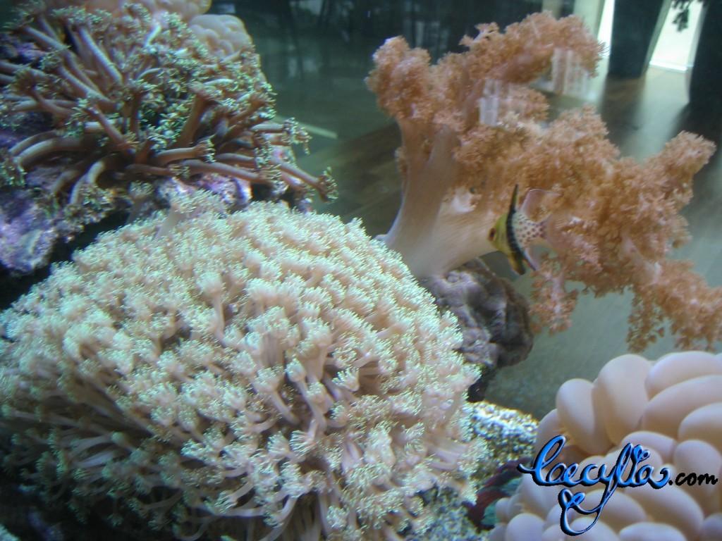Sea anemone2